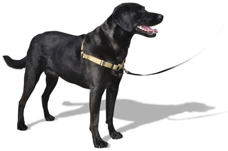 SENSE-ation® Harness