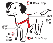 How to fit dog sketch 100711 ccuart Choice Image